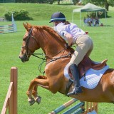 Show Jumping 14650