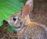 Bunny In The Garden 16553