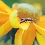Bug On A Yellow-Orange Flower 17175