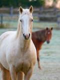Curious Horses 21858