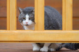 Fat Feline 22816