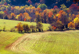 Autumn Field 24741-2