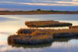 Wetland Hammocks 29678