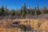 Beaver Lodge 10002