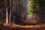 Stony Swamp Trail 26 (10165)
