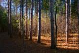 Forest Scene 10079