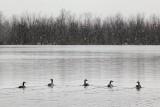 Retreating Geese 20091105