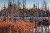 Marsh At Sunrise 10778-9