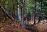 Rideau Trail 10792-3
