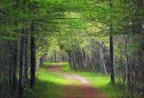 Lime Kiln Trail 89221