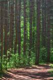Pine Grove Trail 15050