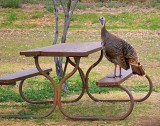 Turkey On The Table 6482