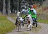 Alaskan Malamute 2-dog team