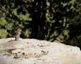 Chatty Chipmunk