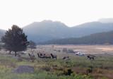 Oct 3 - Rocky Mountain National Park
