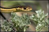 snake 2006 DSC_4879.jpg