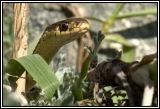 snake 2006 DSC_4895.jpg