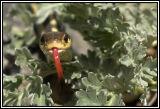 snake 2006 DSC_4908.jpg