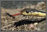 snake 2006 DSC_4968.jpg