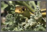 snake 2006 DSC_4978.jpg
