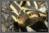 snake 2006 DSC_5147.jpg
