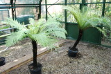 Valdy's Garden and Fernery in the Chilterns, S. East  UK