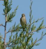 minnesota_birds