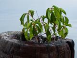 Nature's growing pot