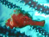 Zeepaardje3.jpg