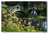 Japanese garden 8-9-8