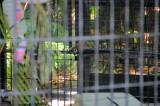 Baby Lemur @Jungle Gardens