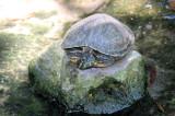 Jungle Gardens 2 turtle