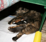 kattungar 3.jpg