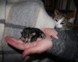 Mi-Ke vaktar noga sina små så att jag inte tar dem från henne!