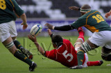 Wales v S.Africa8.jpg