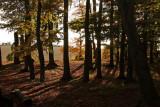 An Autumn Morning.jpg