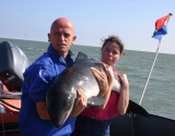 Gallery: Release of Thomas the Harbour Porpoise - 24th of July