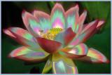 Enhanced Images