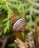 Snail8R.jpg