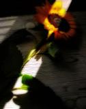 Sunflowers 38