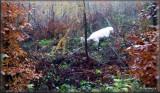 2009 11 07 Hunting (11).jpg