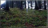 2009 11 07 Hunting (20).jpg