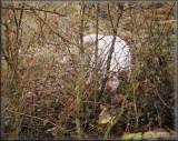 2009 11 07 Hunting (25).jpg