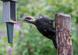Birds In The Backyard