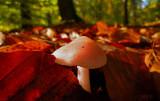 new autumnal life