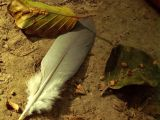 feather on the ground