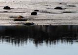 les sapins dans l'eau