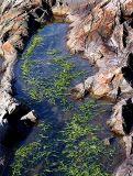 la  baignoire d'algues