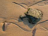 oiseau de sable