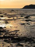Marée basse dorée